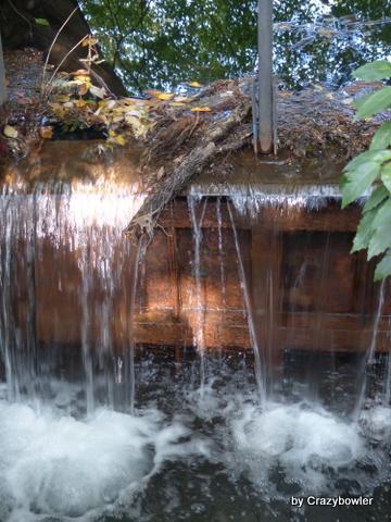 大池と野川源流(日立製作所中央研究所)