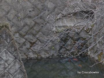 野川と元町用水の合流点(国分寺市)