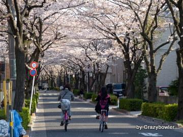 2014年4月伊興の桜