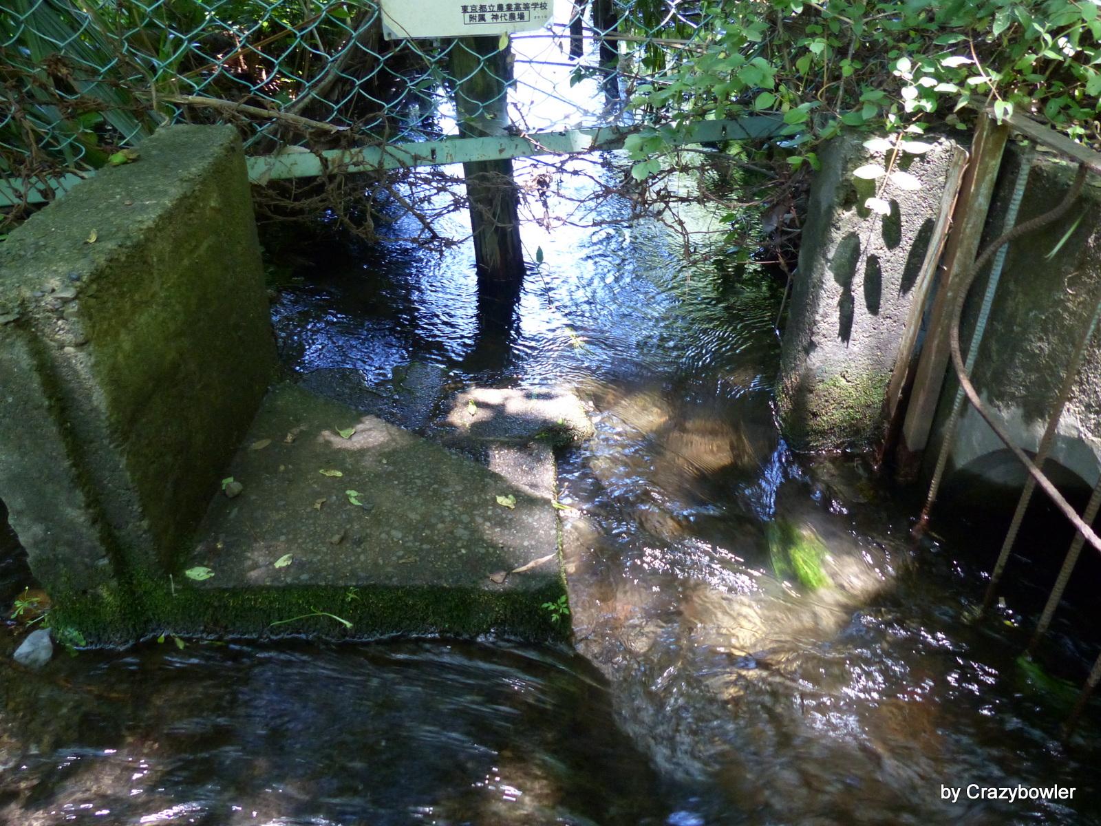 青渭神社の谷