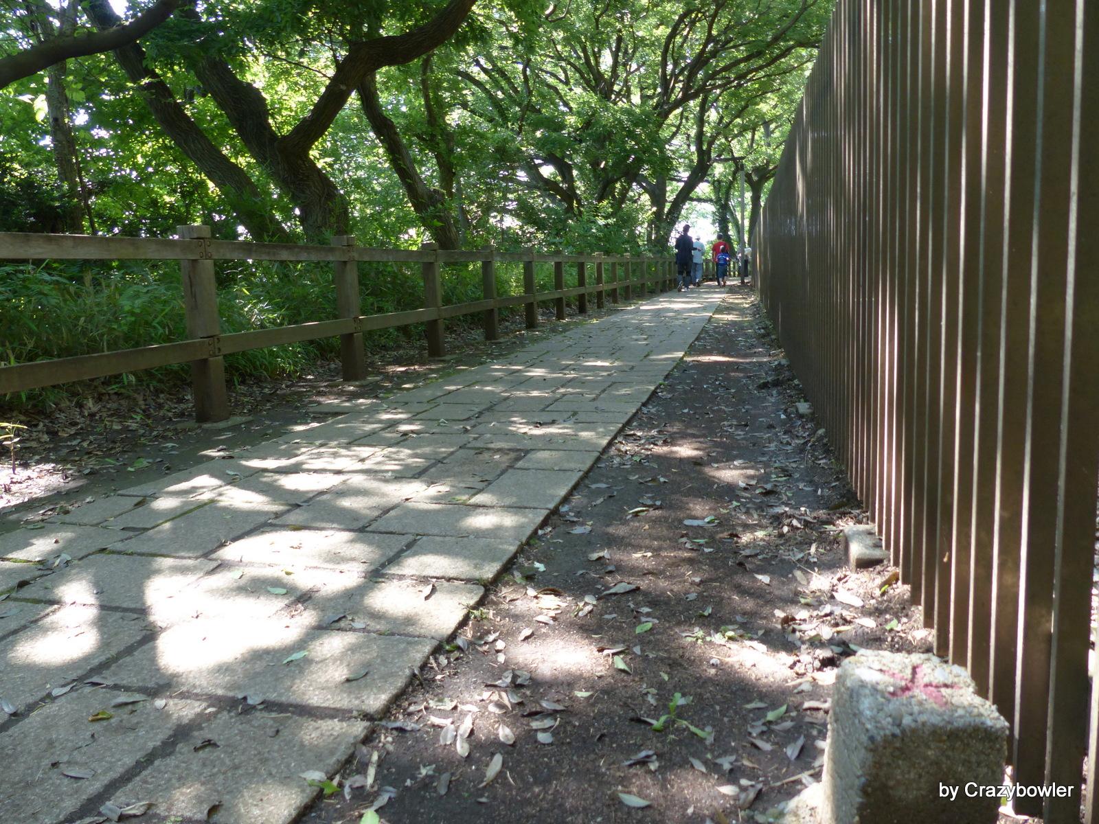 三鷹市大沢2丁目の国分寺崖線遊歩道