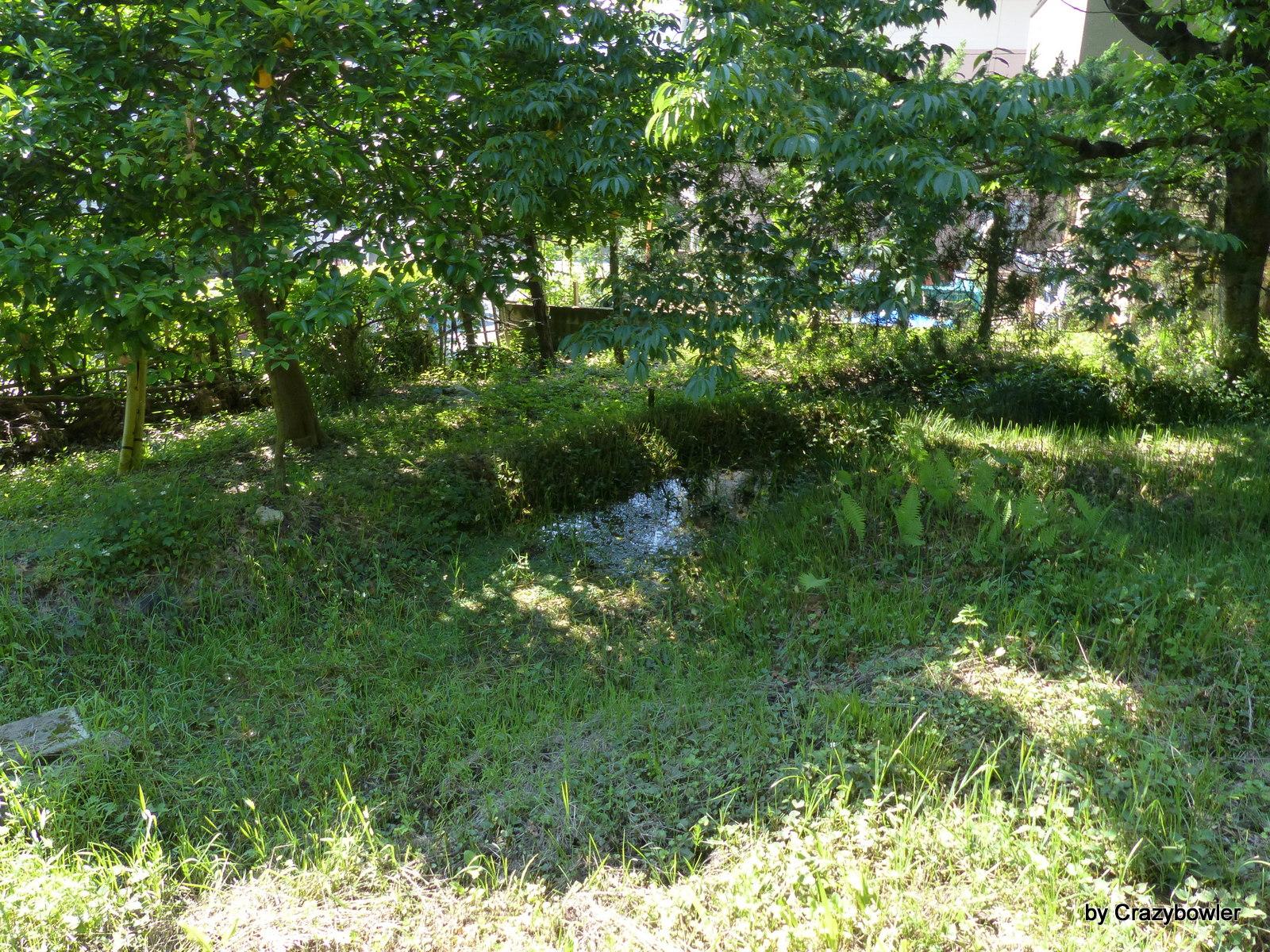 三鷹市大沢2丁目の小さな湿地帯