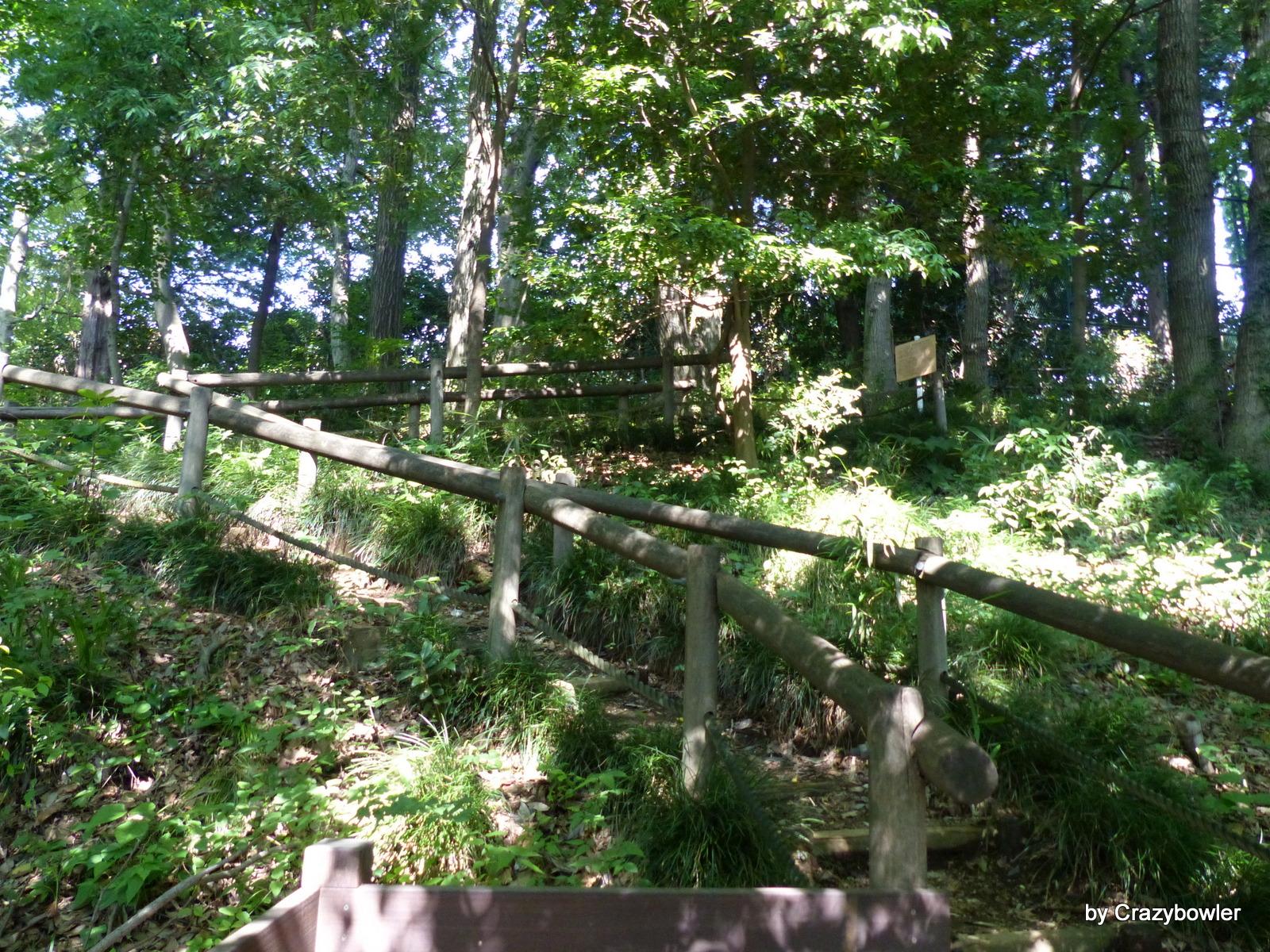 出山横穴墓群8号墓(大沢二丁目)付近の崖線