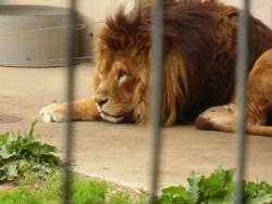 2014盛岡動物園④