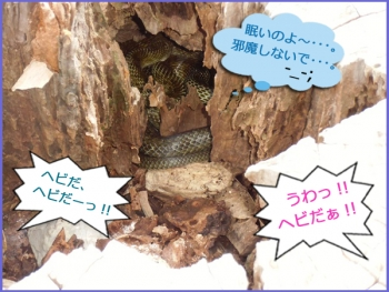 ヘビ発見っ!!