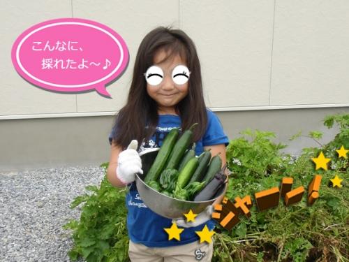 今日の収穫①