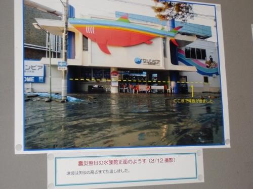 松島水族館②