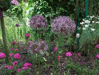 Garlic flower (2)