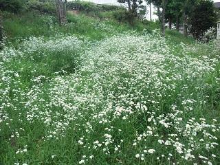 何の花? (2)