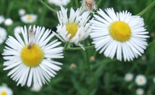 何の花? (3)