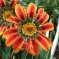 この花の名前なあに? (2)