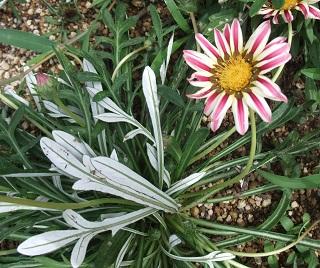 この花の名前はなあに?(3)
