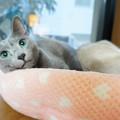 猫ベッドでリラックス