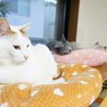猫ベッドコーナー