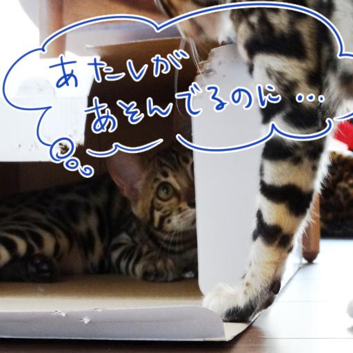 20140601a_04.jpg