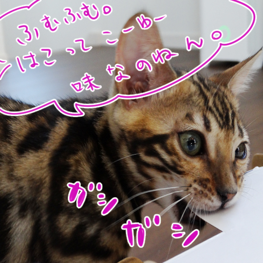 20140601a_05.jpg