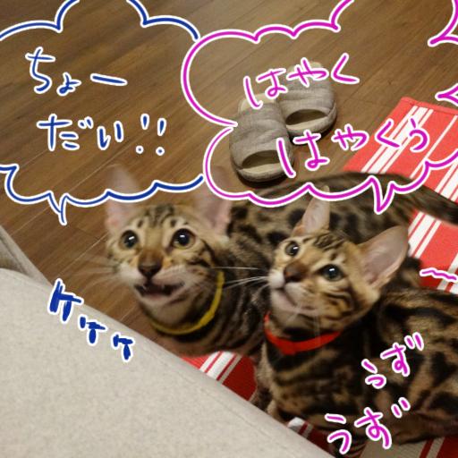 20140611_a_01.jpg