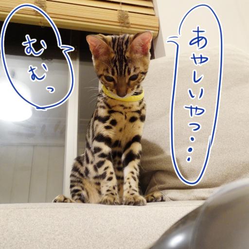 20140623_01.jpg