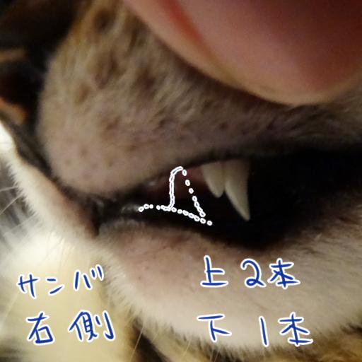 20140717_07.jpg