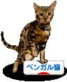 nihonblomura_banner02.png