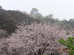 城山の桜 s