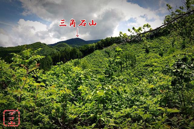yz8s899_09.jpg