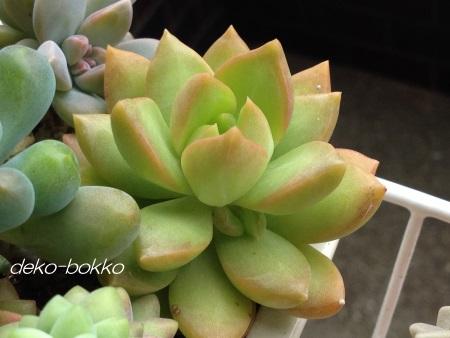 黄麗 子吹き 201406