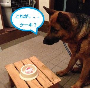 ケーキ待て!
