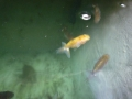 fish1407022.jpg