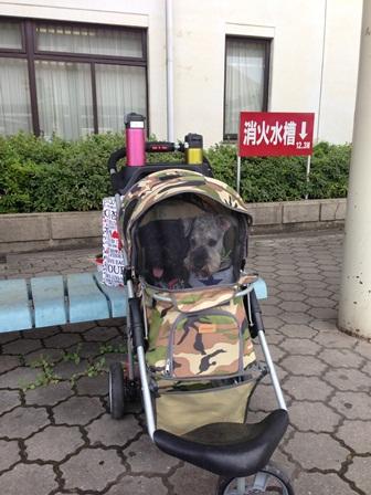 名古屋ペット博03