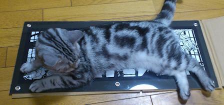 猫&切り絵