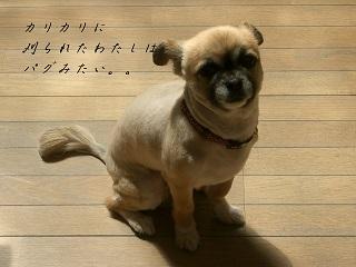 いろいろ印影&イニシャル 027 blog