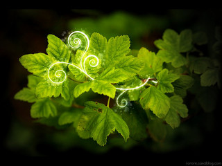 pp_greenplants_201407
