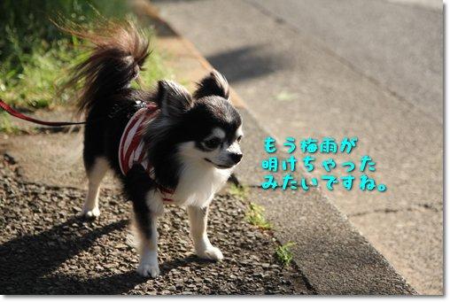 5_20140609213806104.jpg