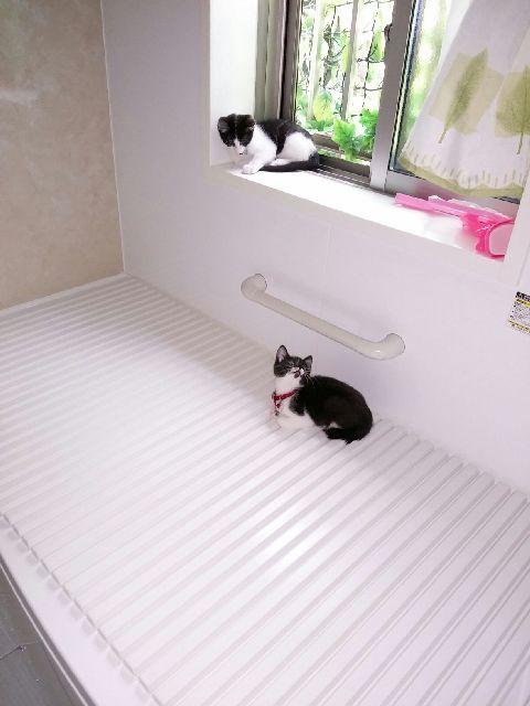 お風呂場で涼み中R