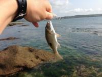 20140422_002_小さな魚