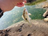 20140422_002_小さな魚2