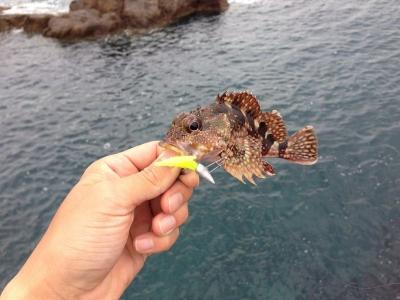20140517_シュラッグミノーで釣ったガラカブ
