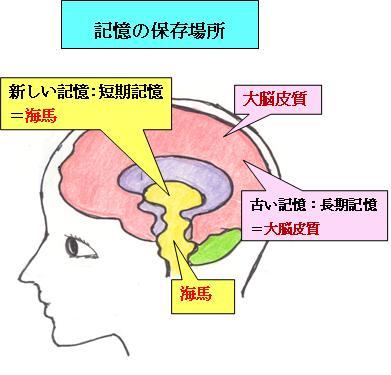 この「 海馬 」を刺激すること ... : 勉強 漢字 : 漢字
