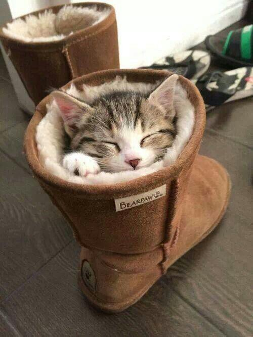 CAT IN BOOT_20140228