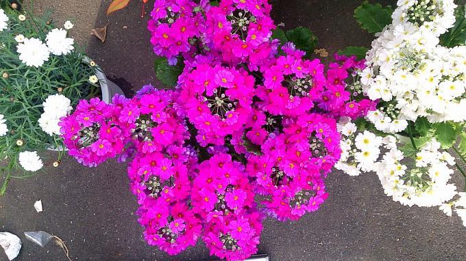 Flower_20140228