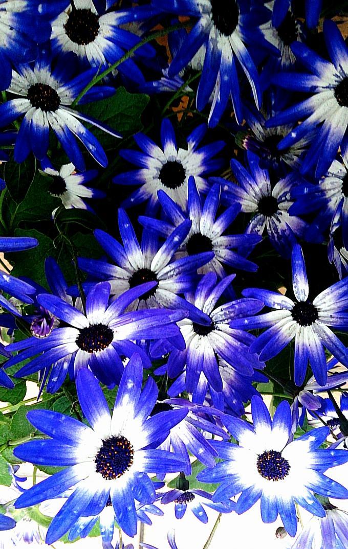 Flower_20140305