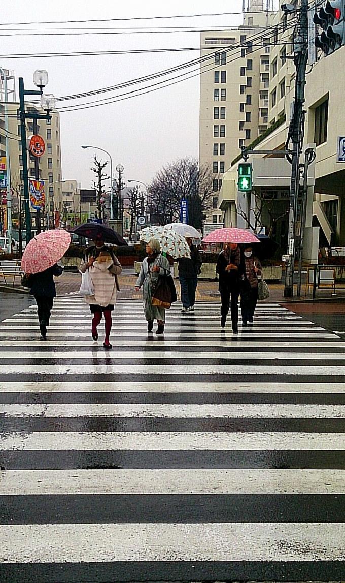 小雨_20140305