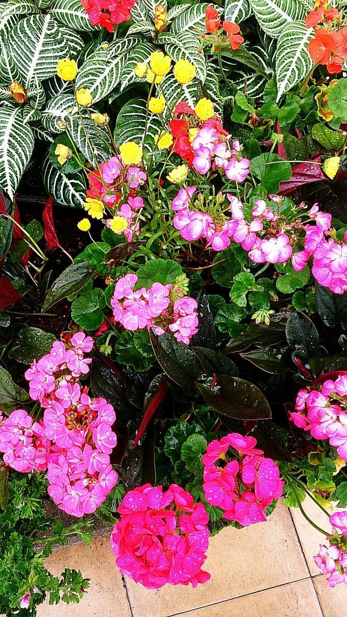 Flower_20140505