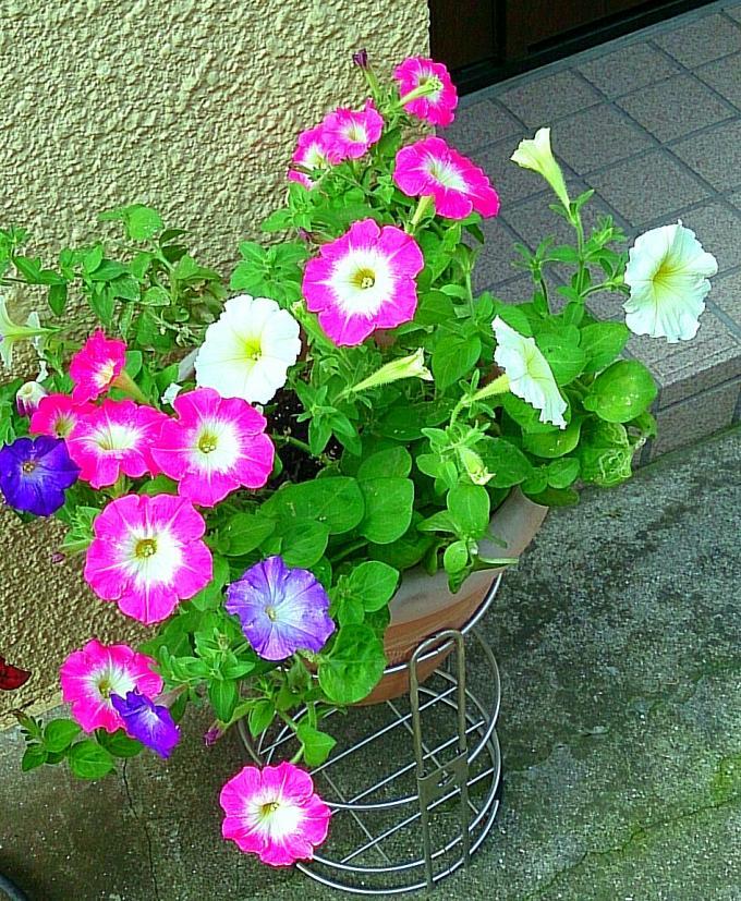 Flower_20140617