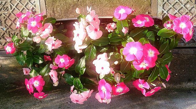 FLOWER_20140626