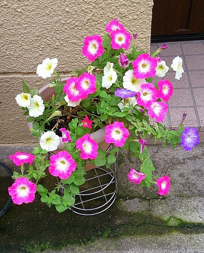 FLOWER_20140701