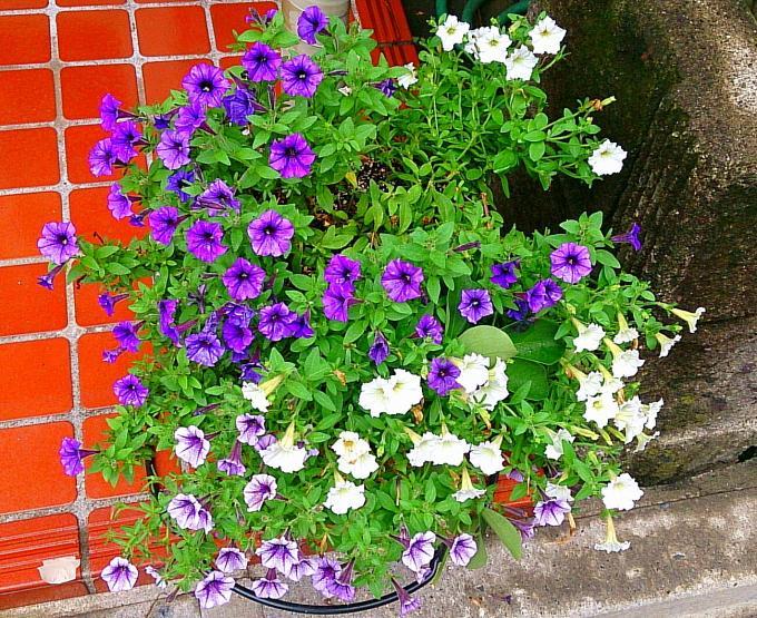 FLOWER_20140710