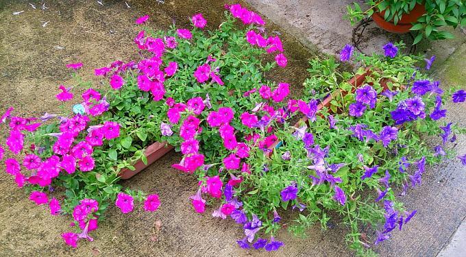 FLOWER_20140709