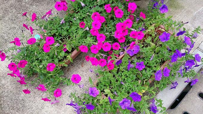 FLOWER_20140714